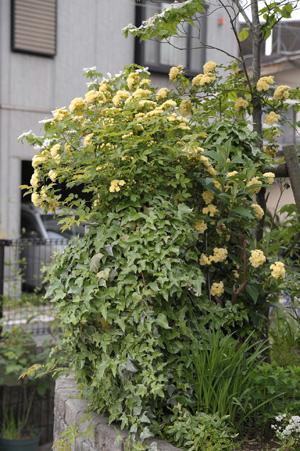 kimokkou2011504-4.jpg