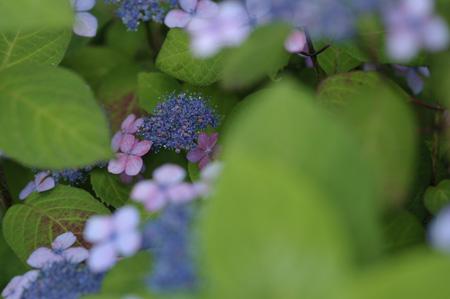 kurohime2011605.jpg