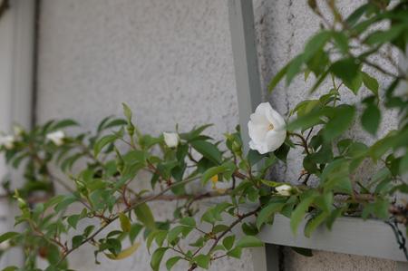 naniwa2011505-1.jpg