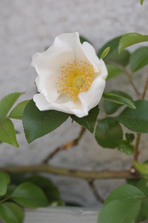 naniwa2011505-3.jpg