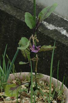 nasu2011601-2.jpg