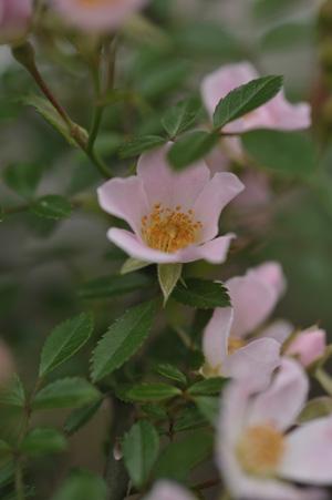 nozomi2011531-1.jpg
