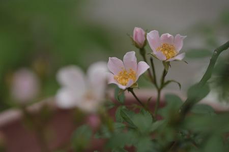 nozomi2011531-5.jpg