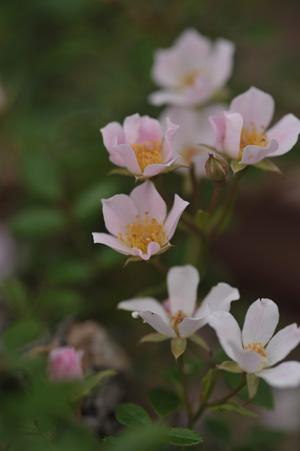nozomi2011605.jpg