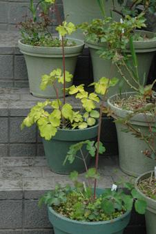 odamaki2011415-1a.jpg
