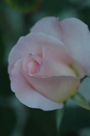 ophelia20111031-1.jpg