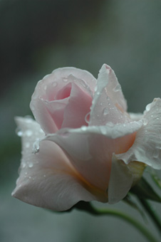ophelia20111118-3.jpg