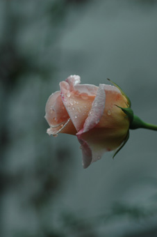 ophelia20111118-3d.jpg
