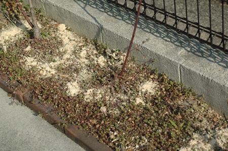 roses2012224-1.jpg