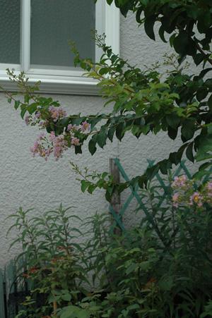 sarusuberi2011802.jpg