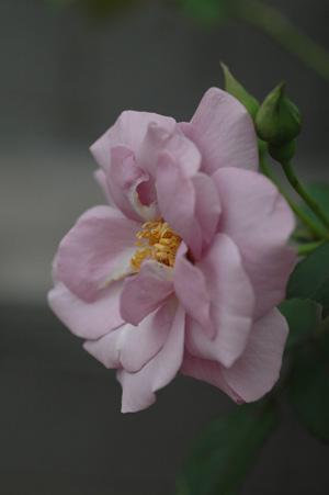 tasogare20111102-2.jpg