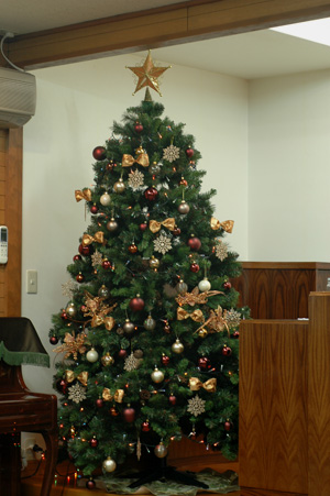 tree2011-1a.jpg