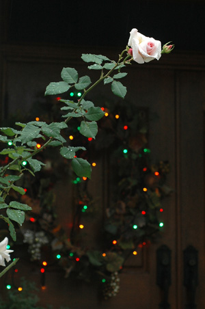 wreath2011-6.jpg