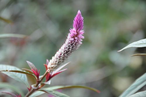 ひょいとした花
