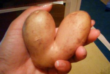 hart potato