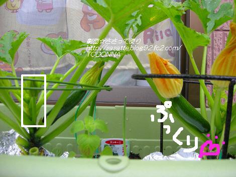 DSCN8428-s1.jpg