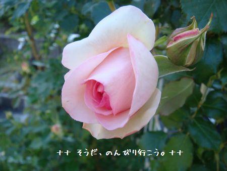 DSC09157-1.jpg