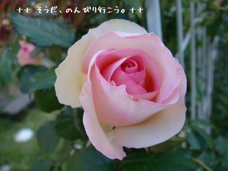 DSC09168-1.jpg