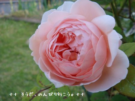 DSC09169-1.jpg