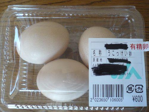 ウコッケイ有精卵