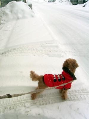 また雪が降りました