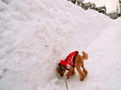 雪の壁になってる。。。