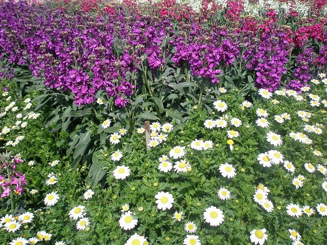 2012 お花畑