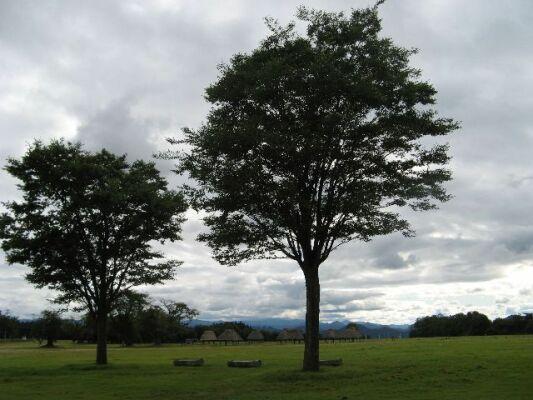 木々と空37394153_1792097687