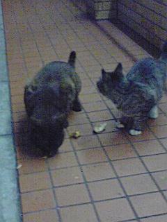 110401_2041~コンビニの猫01.jpg