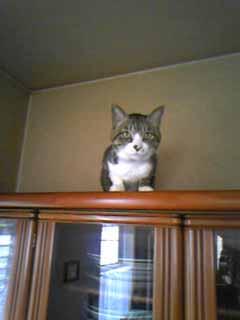 猫実物。実際は今年で干支がひとまわりしたキジ猫です。