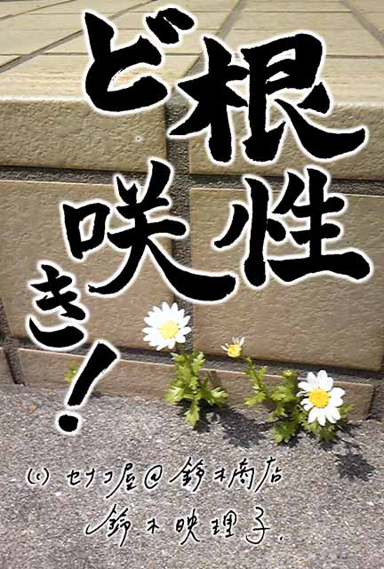 鈴木映理子書・新作ポストカード。ど根性咲き!