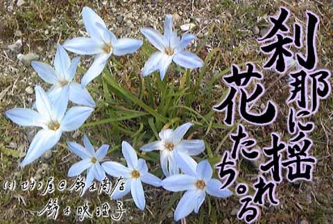 鈴木映理子書・新作ポストカード。庭の花の写真に書を合成!