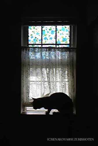 鈴木映理子撮影・「窓際の猫」。逆光を上手く利用!