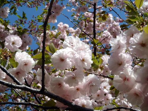 2011_0417_094617-P4170003.jpg