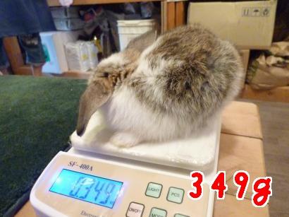 初体重測定