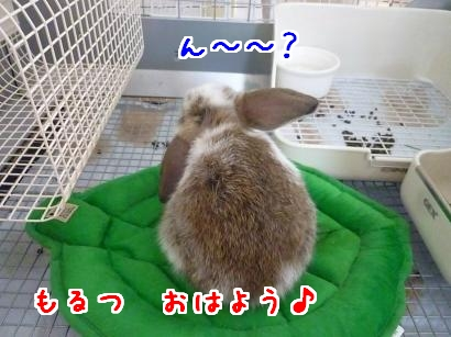 onクッション