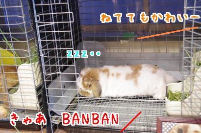 BANBAN2