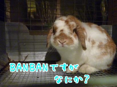 BANBAN.jpg