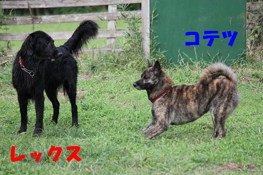 IMG_3643.jpg