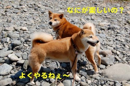 DSC_0053_20110419000508.jpg