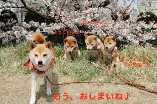 DSC_0092_20110412221842.jpg