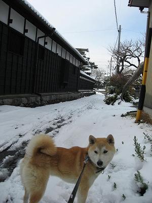 雪残ってるね