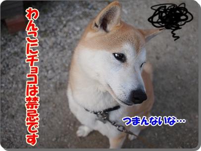 犬にチョコは?