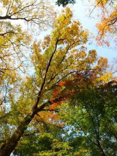 11-11-23-6_convert_20111123163132.jpg