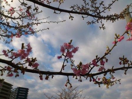 12-03-11_730.jpg