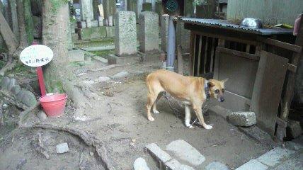 長楽寺の名犬ラッシー