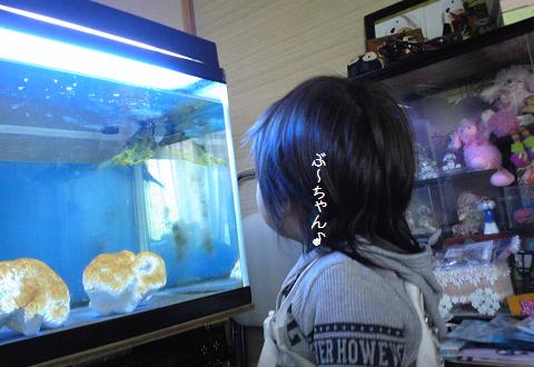 Image1118a_20111020131237.jpg