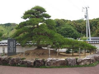 fudasyo-34-matu-nn.jpg