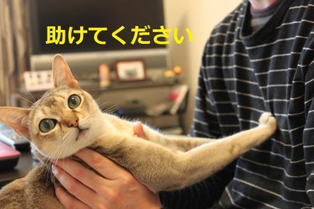 034_convert_20120329181739.jpg