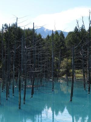 青い池と十勝岳